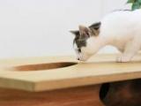 Stół dla kota