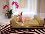 Eleganckie łóżka dla zwierząt