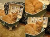 Posłanko dla kota